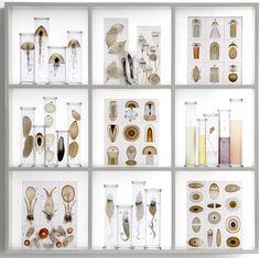 Steffan Dam Cabinet of Curiosities