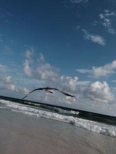 Destin FL seagul 2013