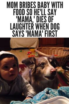 Mom Bribes Baby With Food So He'll Say 'Mama,' Dies Of Laughter When Dog Says 'Mama' First is part of Funny dogs - She bribed her baby to talk, but didn't expect that her dog would beat him to it Cute Funny Animals, Cute Baby Animals, Funny Cute, Funny Dogs, Hilarious, Funny Dog Sayings, Golden Retriever, Labrador Retriever, Cute Animal Videos