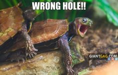 Wrong Hole, Click the link to view today's funniest pictures!