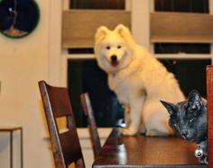 Funny cat and dog pics (11 pics)