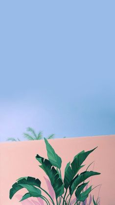 iPhone and Android Wallpapers: Minimalistic Palm iPhone Wallpaper Tumblr Wallpaper, Wallpaper Pastel, Nature Iphone Wallpaper, Aesthetic Iphone Wallpaper, Screen Wallpaper, Aesthetic Wallpapers, Cute Backgrounds, Cute Wallpapers, Wallpaper Backgrounds