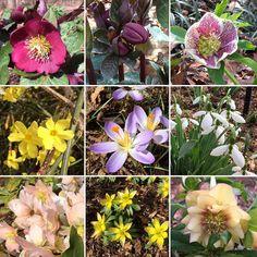 Meadowlark Garden today; peaceful beautiful and FREE in Feb #loveVA #findyourpark #travel
