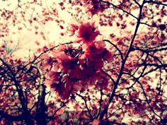» flowers