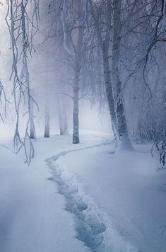 So enchanting and magical - lets take a snowy stroll through the magic forest! Magic forest by Alexei Mikhailov Winter Szenen, Winter Magic, Winter White, Winter Christmas, Winter Walk, Magic Snow, Snow White, Alaska Winter, Winter Road