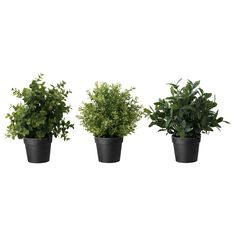 """$5 :: FEJKA Artificial potted plant - IKEA; 9"""" H w/ 4"""" D pot (1st or 3rd)"""