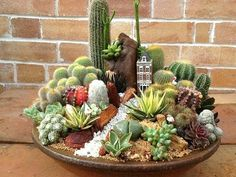 Magical DIY Succulent Fairy Garden Ideas - Decomagz - Sukkulenten-Minigarten You are in the right place about Cactus wallpaper Here we offer you the most - Succulents In Containers, Cacti And Succulents, Planting Succulents, Cactus Plants, Indoor Cactus, Indoor Plants, Balcony Plants, Pot Jardin, Mini Fairy Garden