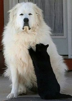 """This is the best scratching post I've ever used!""-- Great Pyrenees are wonderful dogs."