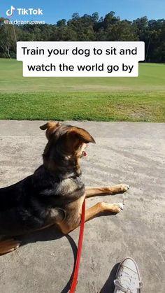 Service Dog Training, Service Dogs, Training Your Dog, Guard Dog Training, Brain Training, Cool Dog Tricks, Teach Dog Tricks, Silly Dogs, Dog Hacks