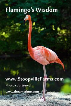 Shaman Flamingo's Wisdom