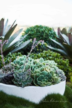 Rooftop Balcony Garden Drummoyne — Adam Robinson Design Plants for bed ed. Balcony Plants, Balcony Garden, Indoor Garden, Outdoor Gardens, Small English Garden, English Garden Design, English Gardens, Tropical Landscaping, Tropical Garden