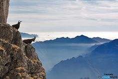On Top by Francesco Vaninetti on 500px ~ Italy
