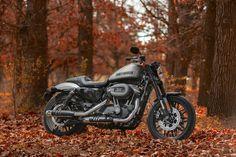 Harley Roadster, Harley Davidson Roadster, Harley Davidson Sportster, Sportster Iron, Custom Sportster, Custom Bobber, Harley 1200, Iron 883, Hot Bikes