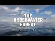 The Gulf of Mexico's 60,000-year-old underwater forest spills its secrets in a new documentary.