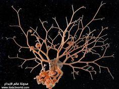 عجائب الأعماق: مدهشة لكائنات الأعماق article-0-07A6A67C000005DC-580_634x477.jpg
