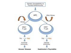 Stress-Induced Th2 Shift and Thyroid Autoimmunity: A Brief Overview and Unifying Hypothesis