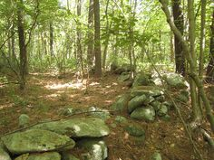 Old stone walls in New England