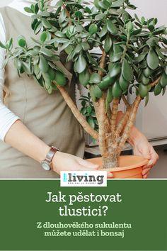 Container Gardening, Gardening Tips, Ikebana, Asparagus, Herbalism, Home And Garden, Flowers, Plants, Herbal Medicine
