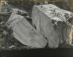 Couper des gros arbres gros arbre coupe 02 photo histoire bonus