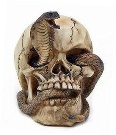 Skeleton Cobra Snake Habitat Skull Figurine Statue Sculpture Halloween NEW http://ift.tt/2jkXPdS #Skeleton #Cobra #Snake #Habitat #Skull #Figurine #Statue #Sculpture #Halloween #NEW #Collectibles #Fantasy #Mythical #Magic #Skulls #smile3bystore