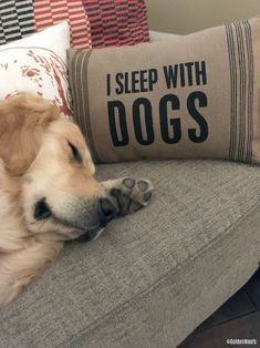 I Sleep With Dogs Home Decor Pillow from Chewy.com #ChewyInfluencer #homedecor #pillows