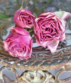 umla:  dried roses by bailiwickdesigns on Flickr.