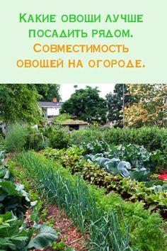 Какие овощи лучше посадить рядом, а какие лучше не стоит.  Совместимость овощей на огороде. #сад #огород #овощи #посадки #урожай #рассада