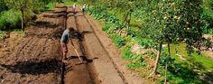 la ferme Permaculture, Beaux Villages, Country Roads, Gardening, Gardens, Farm Gate, Backyard Farming, Environment, Lawn And Garden