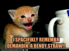 I spacifikly remembr demandin' a bendy straw!! #funnycats #kitteh #computercare
