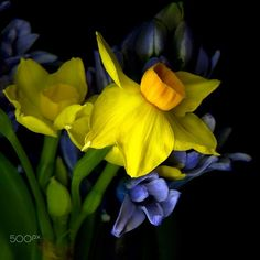 A WHIFF of SPRING... by Magda Indigo on 500px
