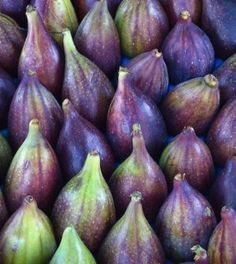 Fico: caratteristiche e proprietà di un frutto miracoloso | Ambiente Bio | Bloglovin'