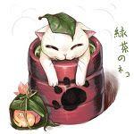 chat thé