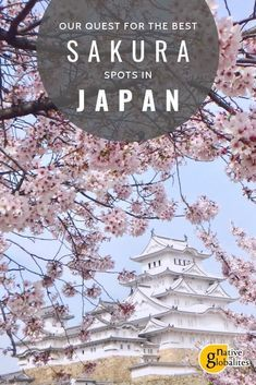 Sakura: the magic of cherry blossoms in Japan. Cherry blossom season is one of the best times to visit Japan. Here's our list of the best places to enjoy these pretty flowers across the country. Cherry Blossom Japan, Cherry Blossom Season, Cherry Blossoms, Japan Travel Guide, Asia Travel, Travel Guides, Japan On A Budget, Japan Sakura, Spring