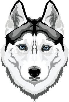 Vector head intelligent dog breed Siberian Husky | Vector | Colourbox on Colourbox