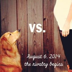 Our pregnancy announcement with our dog, Eleanor:) Though I've heard it's going to be less of a rivalry and more of a BFF thing--what a relief!