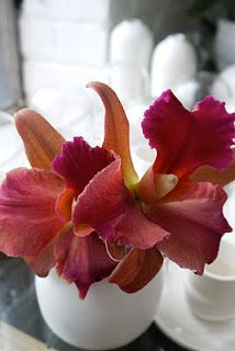 More of the exotic cattleyas. Cattleya Orchid, Cymbidium Orchids, Types Of Orchids, Orchidaceae, Wild Orchid, My Secret Garden, Wedding Beauty, Cut Flowers, Corsage