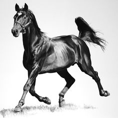 Drawing Horses Charcoal on paper