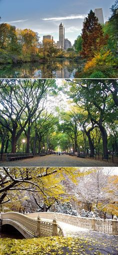 Central Park, New York, New York City...Beautiful and huge.