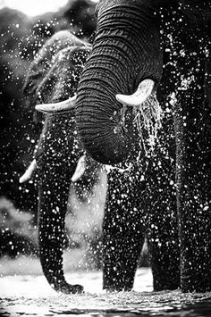 Elephants having a splash by Amy Chka