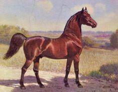 morgan horse | Figure- The Justin Morgan Horse