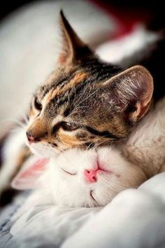cute cats! Cute cats 84 - Click the photo for more cute cats and pets information n pictures. #CuteCats