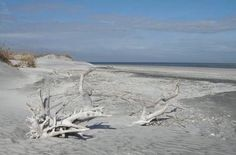 Image detail for -... the dune line of Little Talbot's north beach. Photo by Patrick Leary