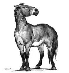 Przewalski's horse by Zionka Horse Drawings, Animal Drawings, Art Drawings, Animal Sketches, Art Sketches, Arte Equina, Horse Sketch, Graffiti Wall Art, Arte Sketchbook