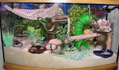This Hermit crab house is awesome. Hermit Crab Cage, Hermit Crab Homes, Hermit Crab Habitat, Hermit Crab Shells, Hermit Crabs, Gecko Terrarium, Terrariums, Lizard Habitat, Bearded Dragon Terrarium