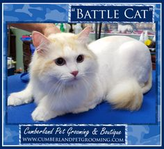 Say hello to Battle Cat! Cat Hairstyles, Pet Grooming, Say Hello, Battle, Things To Come, Pets, Animals, Animales, Animaux