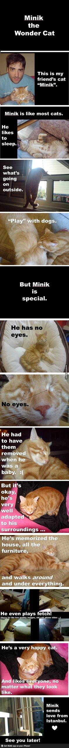 Aww my cat has one eye I can't imagine him not having any eyes!