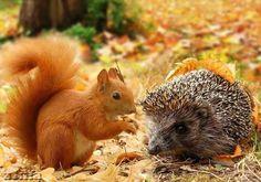 Photo: #animal  #autumn  #cuteanimals