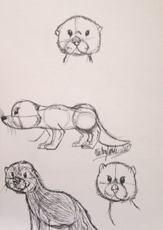 Last month sketches of otter #artist #pendrawings #art #creativeniaarts #sketches #animals #blackink