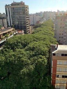 La calle mas arbolada del mundo en Porto Alegre Brasil