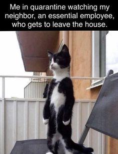 Me in quarantine Grappige Dierlijke Memes, Haha Grappig, Grappige Dierenfoto's, Grappige Dingen, Grappige Dieren, Huisdieren, Katten, Corona, Grappige Katten